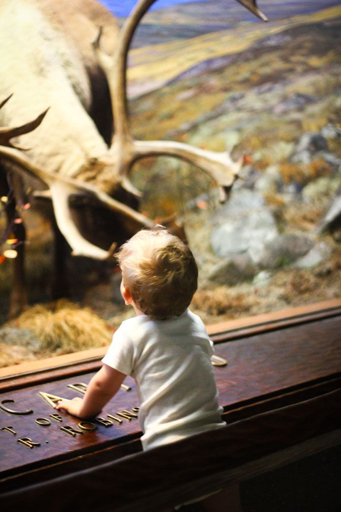 You've seen the giant blue whale, but what about the Discovery Room? 5 tips on how one should visit AMNH with children.