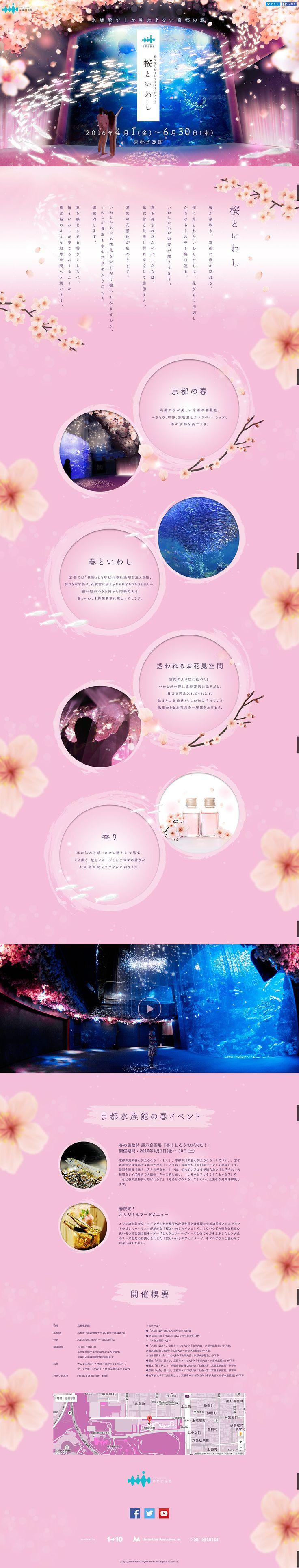春を楽しむインタラクティブアート 桜といわし | 京都水族館