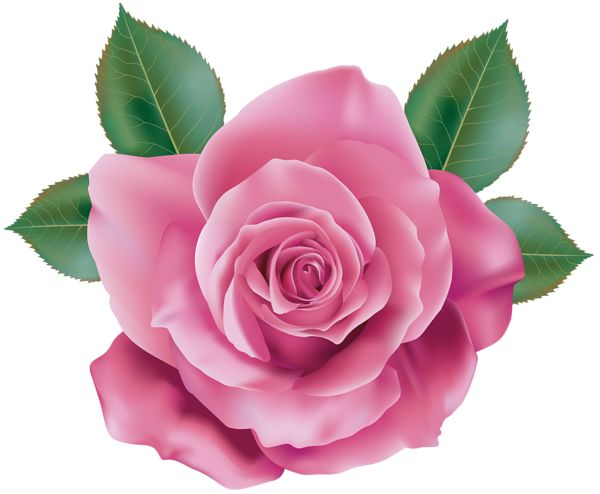 rose flowers digital design - photo #30
