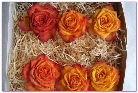 Orange Rose Heads