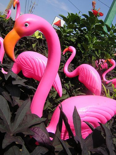 You can never have enough pink flamingo's in the garden!