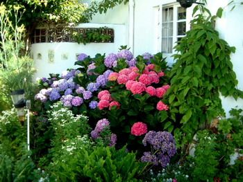I think I might use the information found here to change my hydrangeas from blue to pink this year!