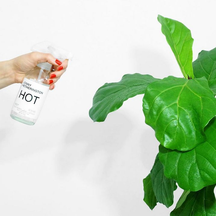 How do you reuse your #JonnyHetheringtonEssentials bottle? Screw a spray top on and make a hand sized mister. #EssentialReuse #Mister #Mist #Bottle #Green #Plant #Leaves #Hand #RedNails #Red #Nails #Water #Spray #BostonRound #HotSauce #HabaneroSauce #Habanero #Beet #Spicy #Hot #Natural
