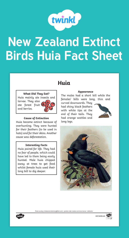 Huia Fact Sheet for Extinct Birds