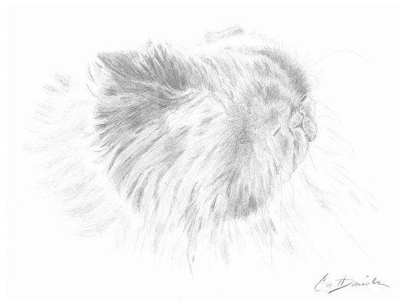 Himalayan Cat Pencil Drawing Original Hand Drawn Art 8.5 x