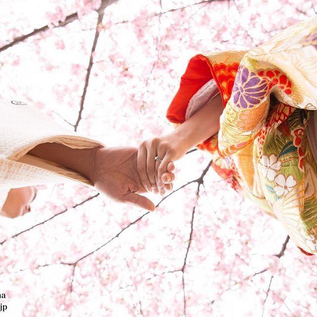 #littlemartha #リトルマーサ #代官山 #フォトスタジオ #wedding #ウエディング #bridal #ブライダル #前撮り #和装 #着物 #色打掛 #kimono #桜 #花嫁 #プレ花嫁 #ロケフォト