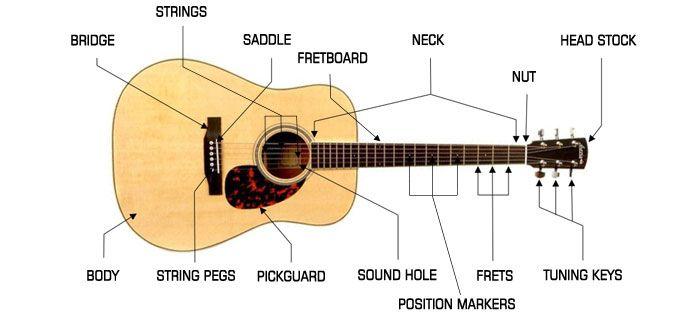 Parts Of A Guitar Acoustic Google Search Guitar Pickguard Acoustic Guitar