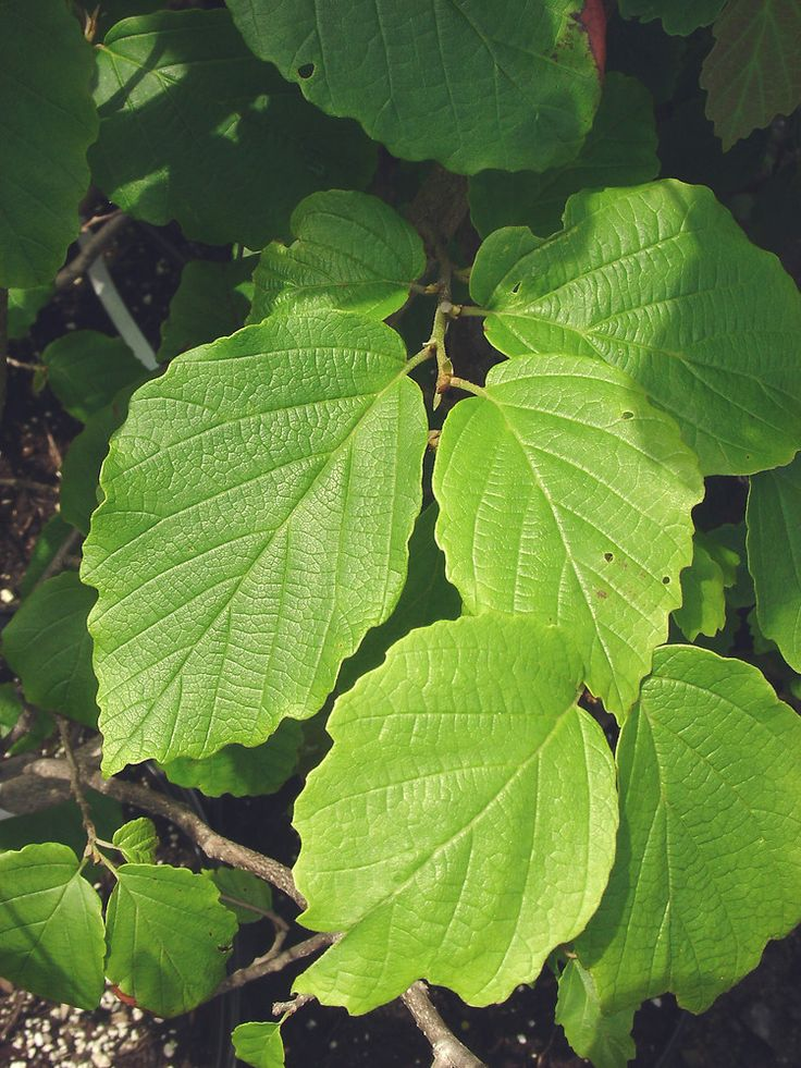 42 best native plants of the northeast usa images on pinterest