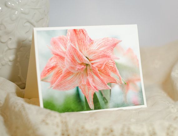 Pink Amaryllis Flower Photo Greeting Card Floral by SandieConry
