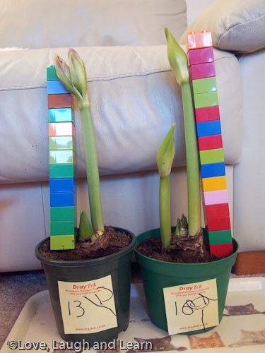 Measuring plants with blocks! | no ruler, no problem - children find other things to measure with (I have also seen children measure plants with string)