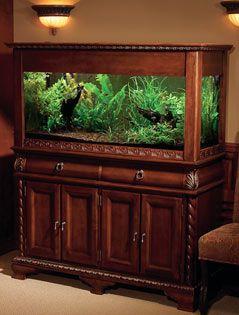 Tuscan fish tank. I want this!