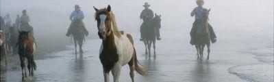 Rear Window Graphics | See-Thru Horses Rear Window Decals & Horses Window Graphics