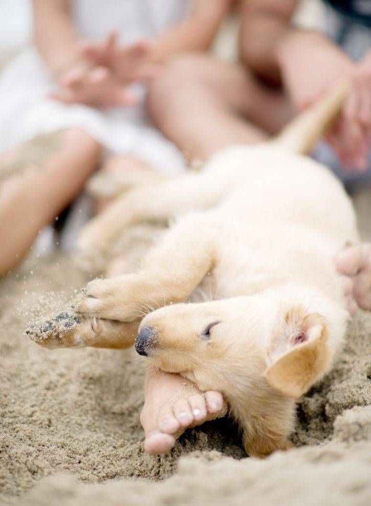 Do you take your #dog everywhere in the summer?