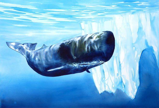 Whale watercolour by Alfred Memelink www.memelink.nz