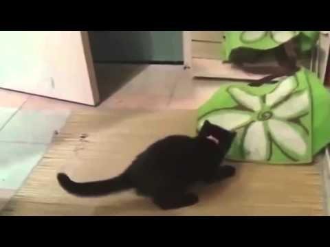 Vídeos de gatitos - Videos de gatos - Videos chistosos - Videos divertidos de gatos - http://otrascosasvirales.com/videos-de-gatitos-videos-de-gatos-videos-chistosos-videos-divertidos-de-gatos/