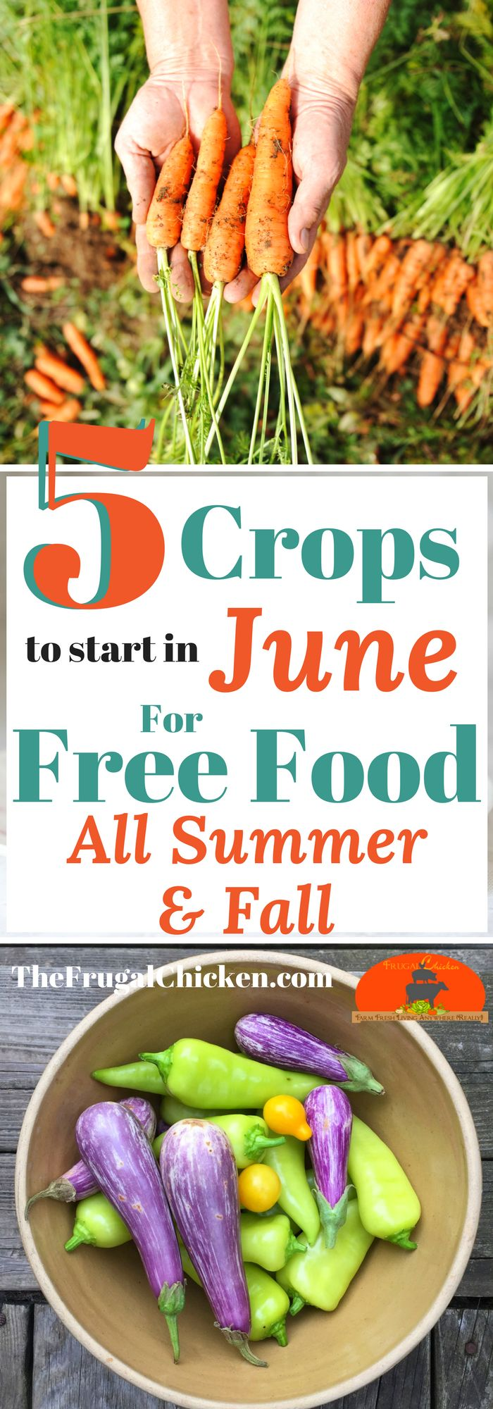 Summer is here, but your chances at a successful harvest is far from over. Here's what you can start in your garden right now for free food this summer and into fall!