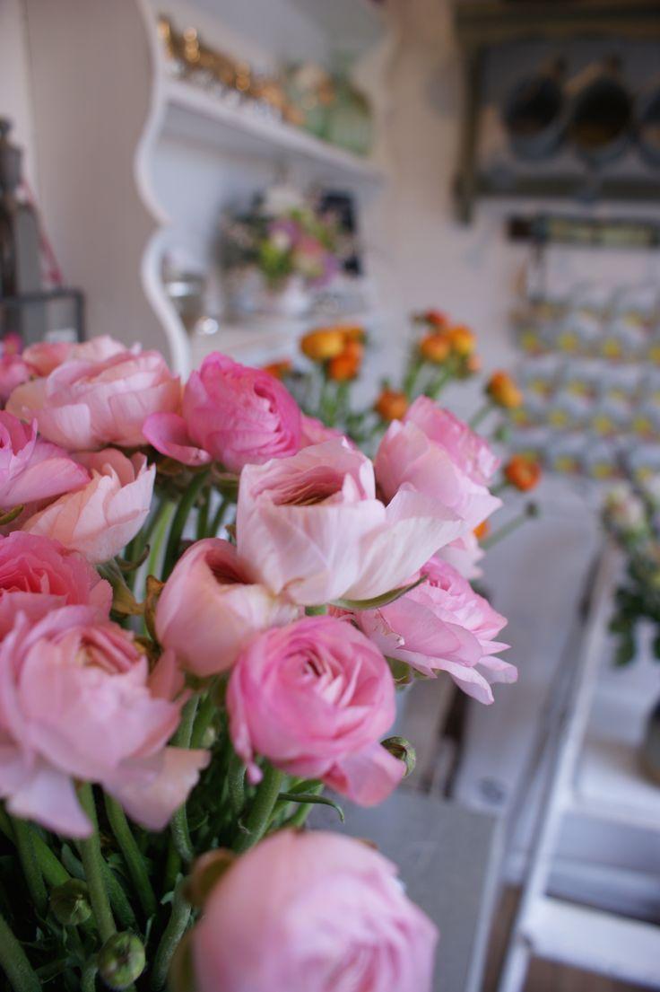 Pretty Pink Ranunculus