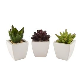 Set Of 3 Succulents $15
