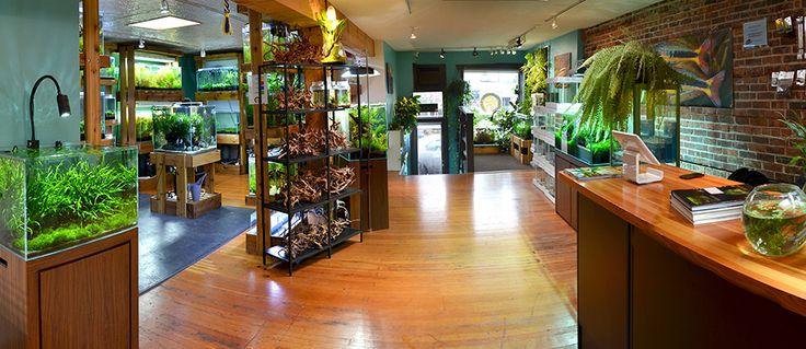 Aquarium Zen, Seattle. Tropical Fish Store, Aquatic Plants and Nature  AquariumSupplies.