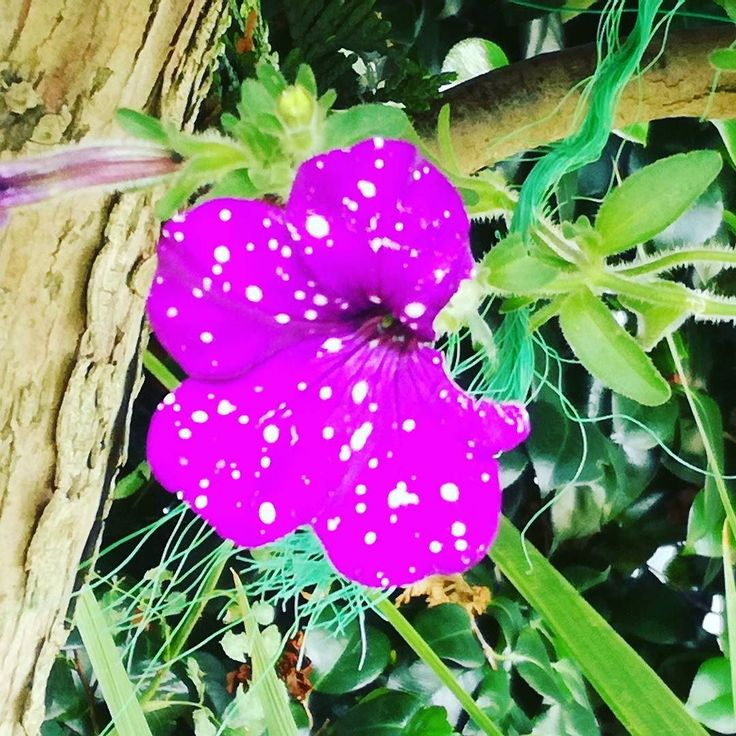 Czy to piegi?   #lato #kwiaty #dianapozytywnie