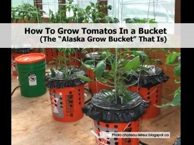 How To Grow Tomatos in a Bucket - The Alaska Grow Bucket That Is
