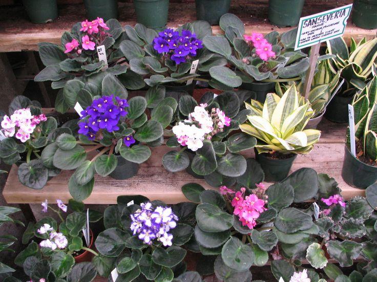Plants, Garden Center, Houseplants, Nursery, Plants And Planters