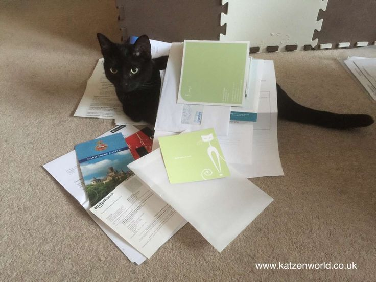 find this fantastic photo from Katzenworld  http://katzenworld.co.uk/2015/04/29/winners-announced-myjobyourjob-find-out-what-our-most-popular-captions-are/