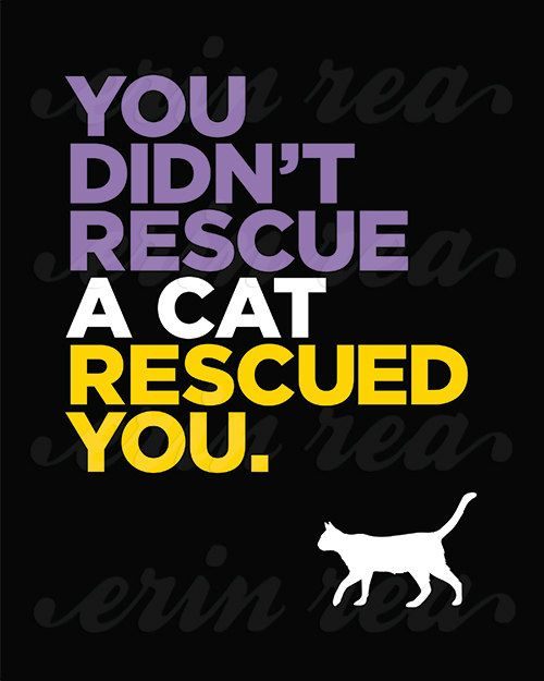 Your Cat Rescued You Custom Cat Art Print by ModernPetPortraits / anybody who rescues either a cat or a dog will see exactly true this is.  You'll be so glad you did. ♥  Animals love you instinctively and forever and always!