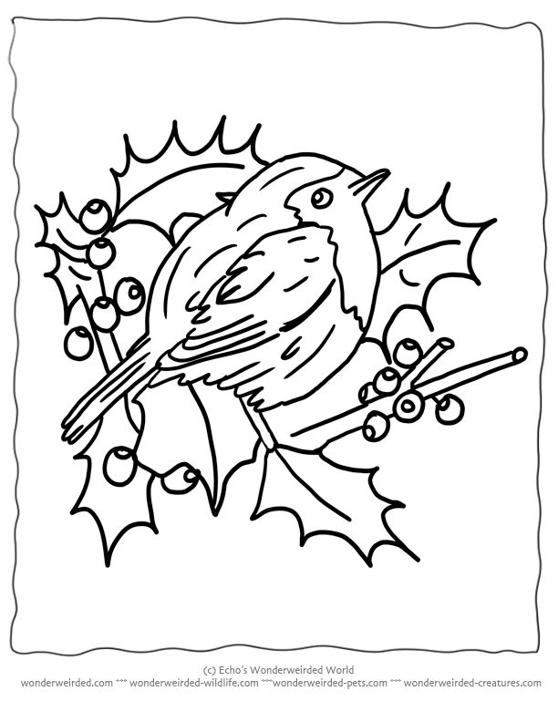 154 best Christian Christmas Coloring Pages images on Pinterest - copy coloring pages birds in winter