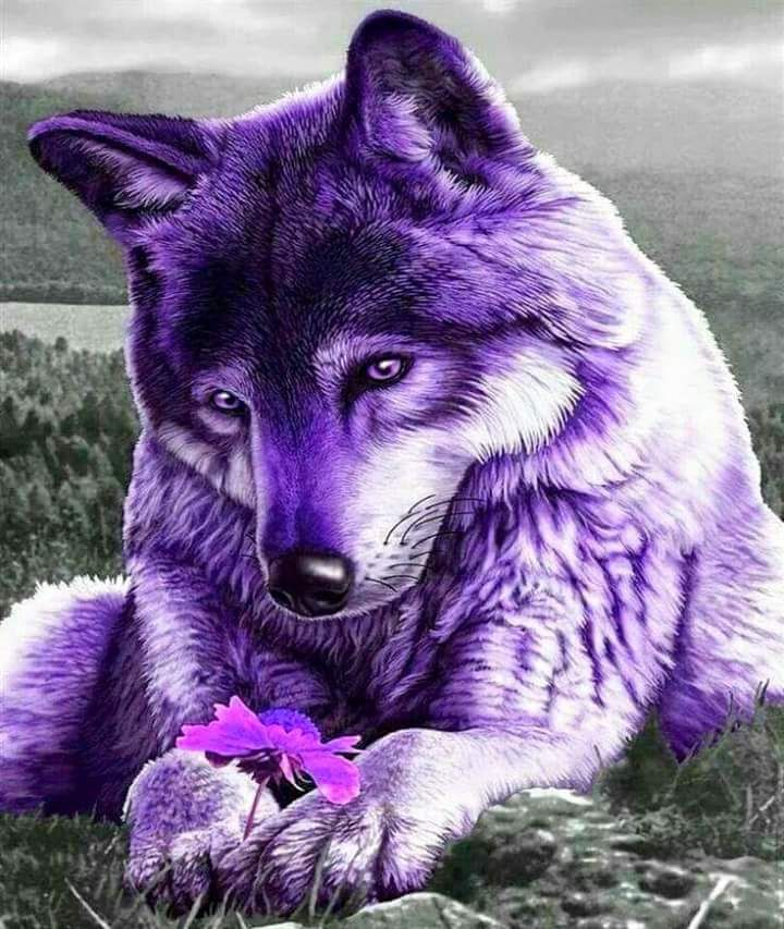White Wolf With Purple Eyes 716 best Wolves images...