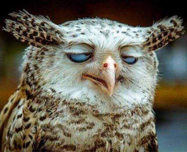 Sleepy awl http://ift.tt/2bj0zlk