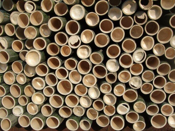 Bambus. Copyright: Keflico A/S.
