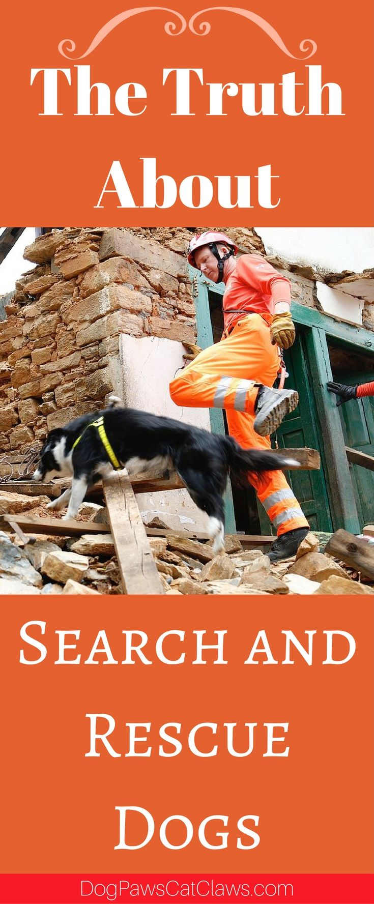 Search and Rescue DogsIn medieval times, the famed St. Bernard was bred and trained by monks in the Alps to rescue avalanche victims and...
