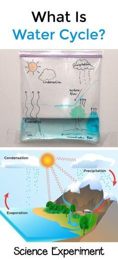 Water cycle in a bag   STEM For Kids