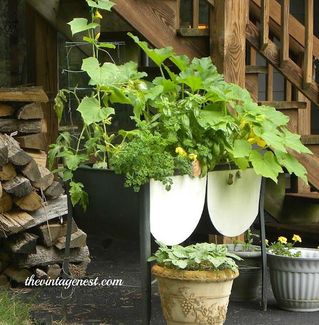 ... Nest: Yard Sale Gardening: Old wash tub holds a mini veggie garden