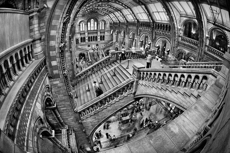 Fisheye lens - Natural History Museum in London Black and White Photo310