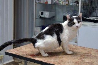 Чем лечить кровь в моче кошки? - http://vipmodnica.ru/chem-lechit-krov-v-moche-koshki/