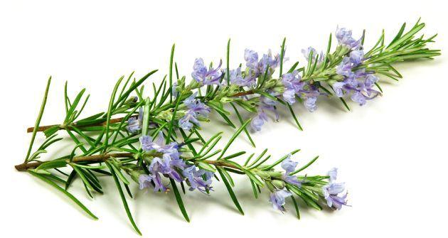 În vremuri aproape imemoriale, plantele au erau singurele medicamente și leacuri pentru boli disponibile în natură, fiind apreciate la adevărata lor valoare datorită efectelor lor terapeutice profunde. Știința, ca metodă de colectare a probelor, nu …