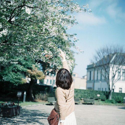 はじめましての桜   by **mog**