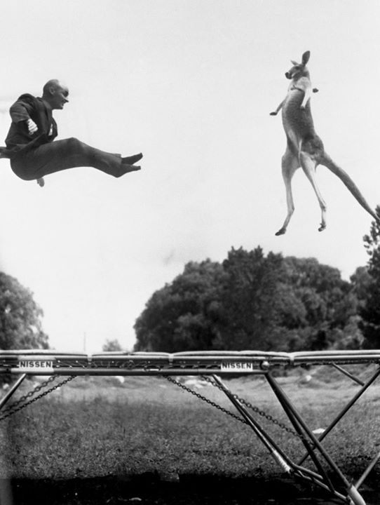 George Nissen inventor of the modern trampoline jumps with a kangaroo during a publicity stunt in Central Park New York 1960 [1000 x 1327] #HistoryPorn #history #retro http://ift.tt/1PjFdEn