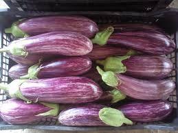 Tsakoniki eggplant-Leonidio