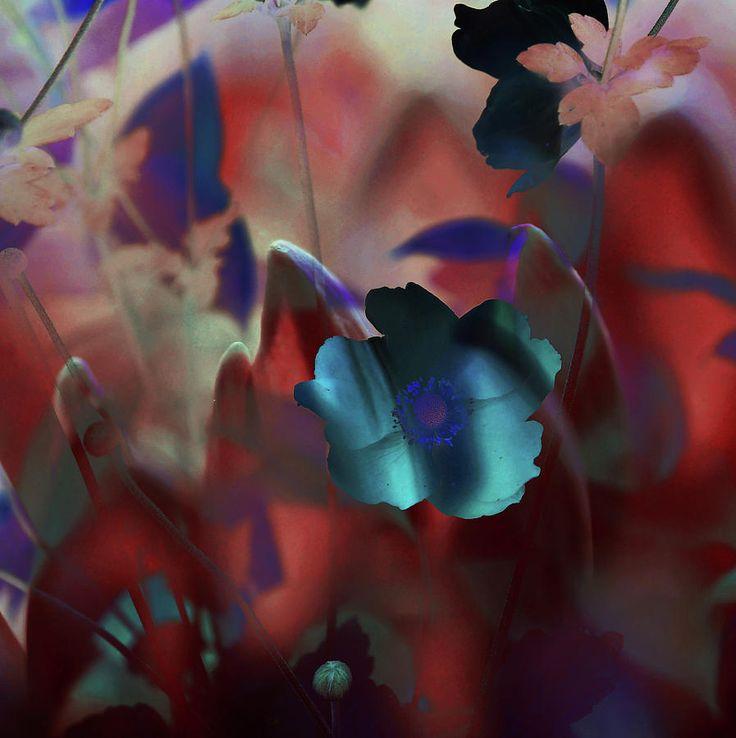 Mars Flowers Magic by Jenny Rainbow