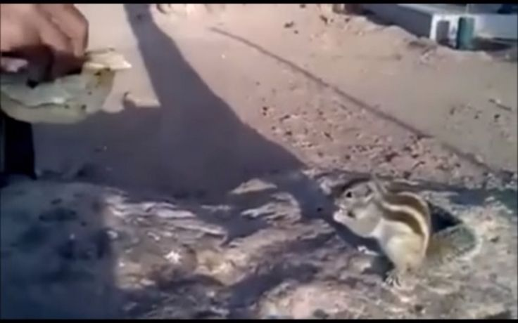 Kind Soldier Stops to Share His Lunch With a Hungry Squirrel (VIDEO)