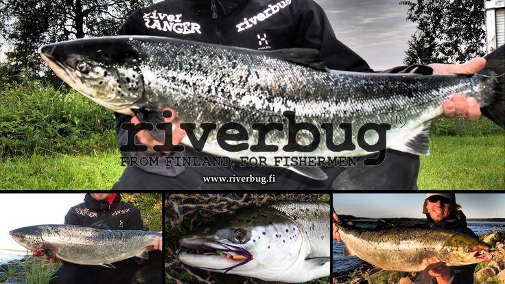RiverTube victoms from Tornio River. #riverbug #rivertube www.riverbug.fi