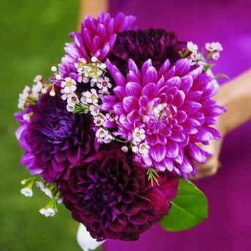 Go Bold with Dahlias  Magenta dahlias and a few sprigs of wax flowers create a strikingly simple bouquet. These substantial flowers last about two weeks after cutting and easily stand up to the tousling every wedding bouquet receives. Dahlias are available in shades of white, pink, red, yellow, orange, and purple.