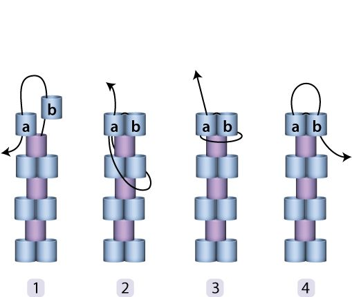 Edge increase in Peyote - site has a series of excellent diagrams for odd/even peyote. #Seed #Bead #Tutorials