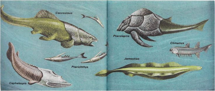 How have animals with backbones evolved?