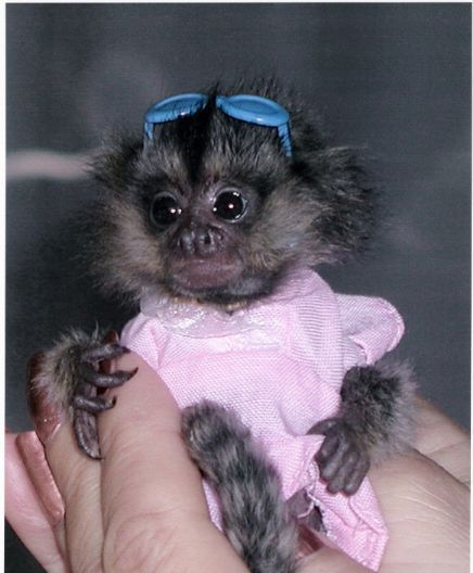 Baby Marmoset!  Isn't she the cutest?!