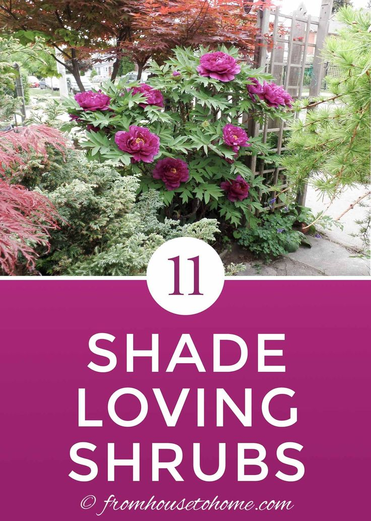 This list of bushes that thrive in the shade is AWESOME! So many beautiful flowe…