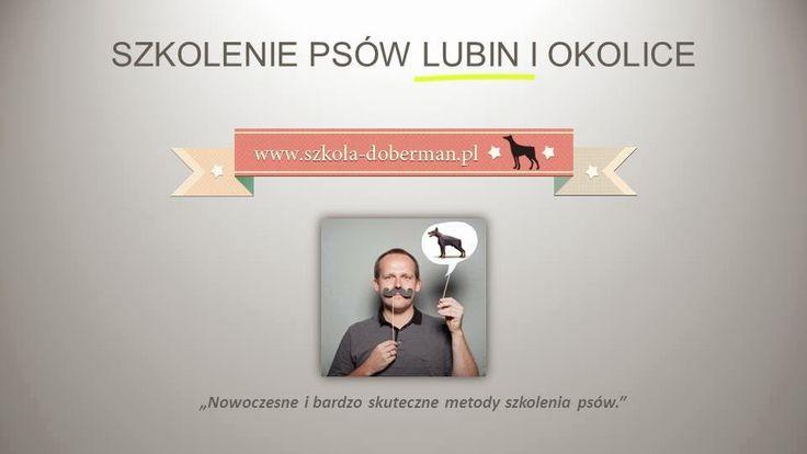Szkolenie psów, tresura i nowości ze świata: Szkolenie psów LUBIN tresura psa w Lubinie - super...